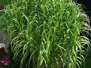 Heimische Pflanzen Für Den Garten : graser garten sichtschutz ~ Michelbontemps.com Haus und Dekorationen