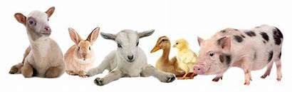 Farm Animals Animal Petting Zoo Down Fair