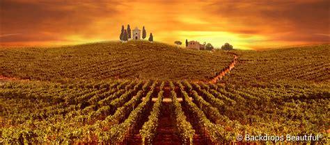 wine  stunning event ideas backdrops beautiful blog
