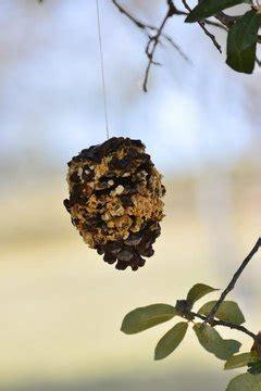 peanut butter bird feeder sciencing
