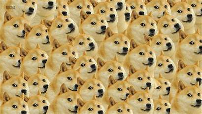 Doge Dog Memes Face Px Wallpapers Desktop