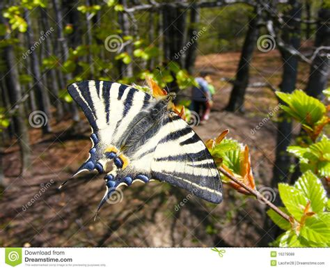 Butterfly In The Forest Royalty Free Stock Photos Image