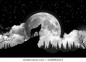 White Wolf Images, Stock Photos & Vectors | Shutterstock