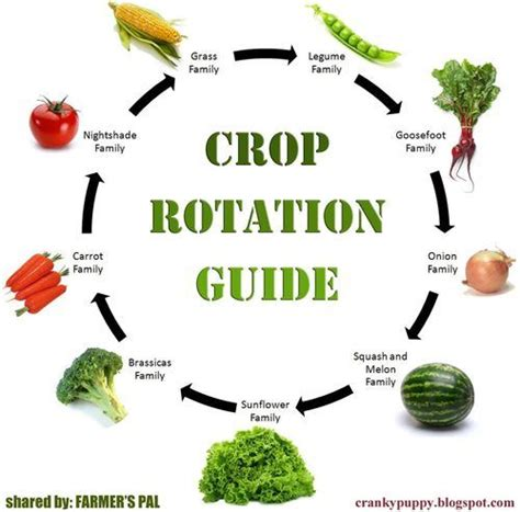 crop rotation tips   gardening results examples