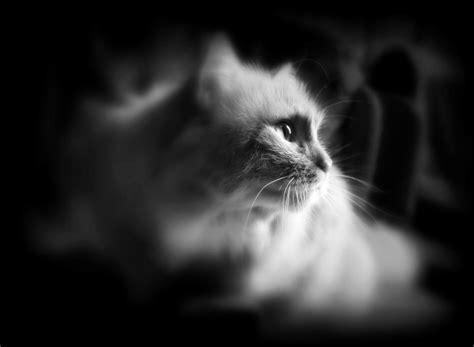 cat  stock photo public domain pictures