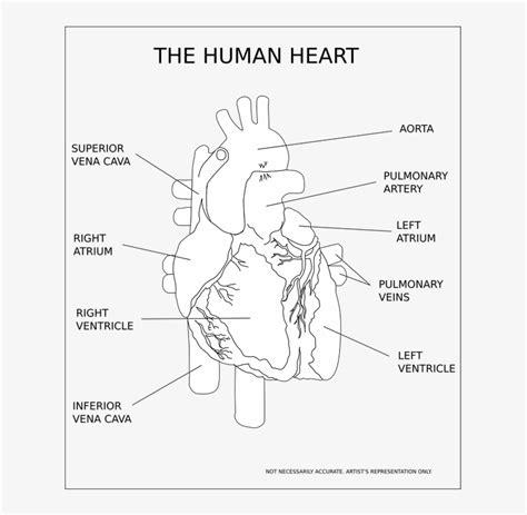Select a human anatomy system to begin. Get Body Smart Anatomy - Gi 1 Bio337 W2020 Introduction To Digestive Systems In Animals Studocu ...