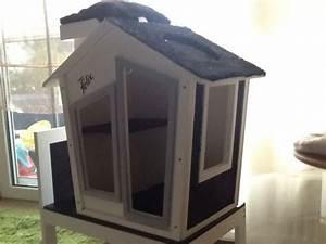 Haus Kaufen Rangsdorf : katzenhaus von felix in brandenburg rangsdorf ebay kleinanzeigen katzenbabys kaufen ~ A.2002-acura-tl-radio.info Haus und Dekorationen