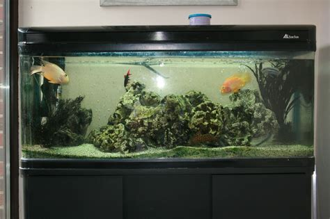 Decorations: Big Fish Tanks For Sale With Exciting And