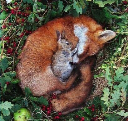 niedliche tierbilder erstaunliche freundschaften zwischen