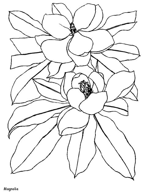 printable magnolia flowers coloring pages