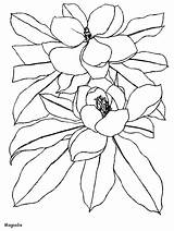 Coloring Magnolia Pages Flowers Printable Disegni Fiori Coloringpagebook Advertisement sketch template