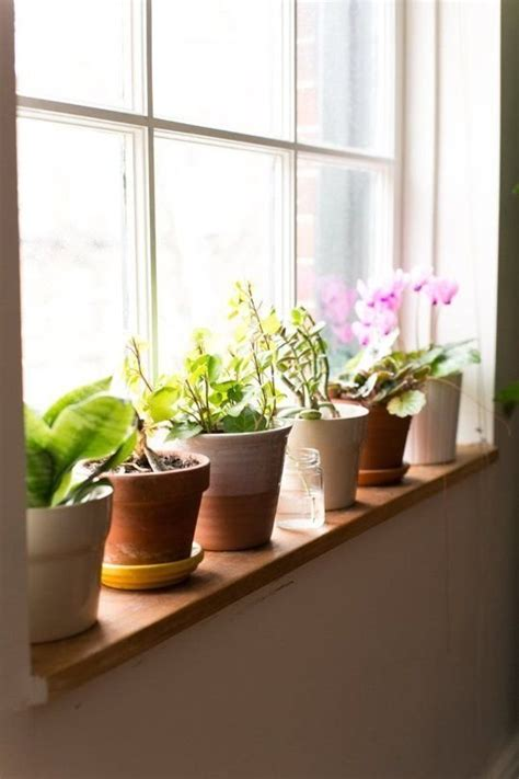 Indoor Windowsill Flowers by Windowsill Plant 27 Awesome Indoor Houseplants To