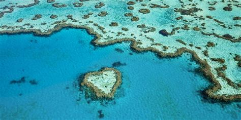 reasons     great barrier reef  great