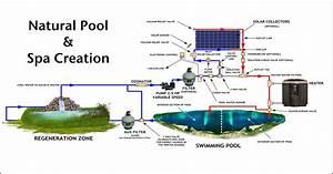 Natural Pool  U0026 Spa  Duplicable City Center Natural Pool