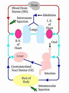 Schematic Of The Circulatory System That A Np Based