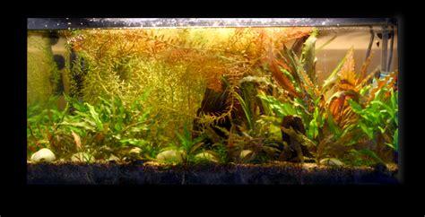 aquarium eau douce sans entretien