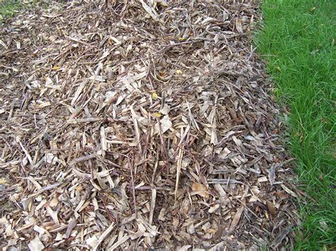 uses of mulch wood chip mulch i grow vegetables