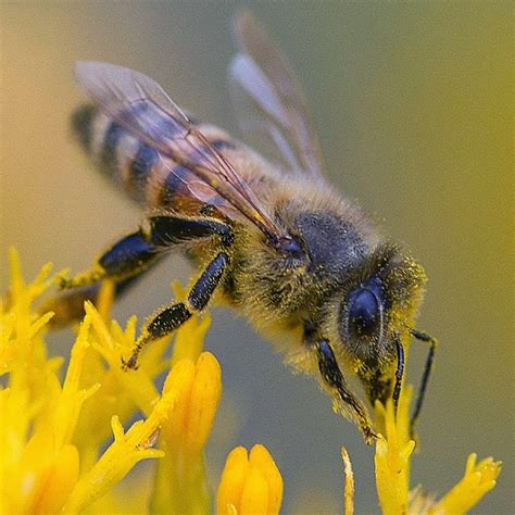 tips about buying honey bees for your small business