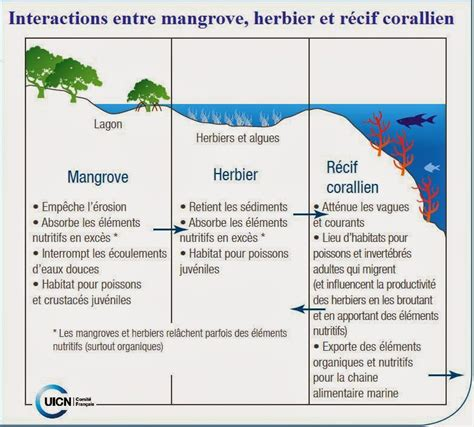 21 Mars De L'importance Des Forêts Pour La Mer