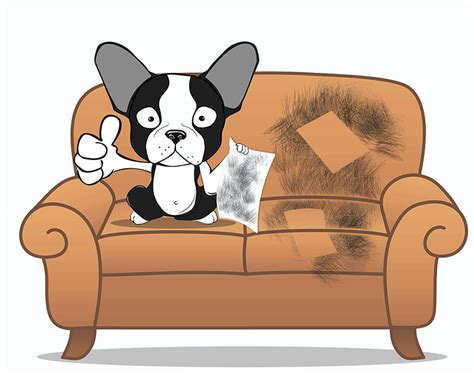 how to remove dog hair from sofa pet hair removal get rid of unwanted pet hair brazilianmat