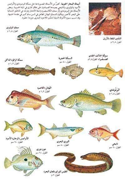 anoaaa alasmak bhth google types  fish fish