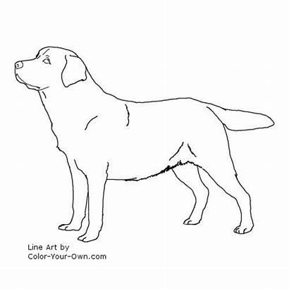 Labrador Coloring Retriever Dog Pages Lab Line