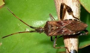 Viele Fliegen Am Fenster : insektenbefall haust re haushalt insekten schutz ~ Orissabook.com Haus und Dekorationen