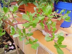 Ameisen Entfernen Garten : ameisen im garten vernichten ameisen im garten vernichten ~ Lizthompson.info Haus und Dekorationen