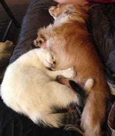 1000 images about dogs on pinterest sheds don ts and