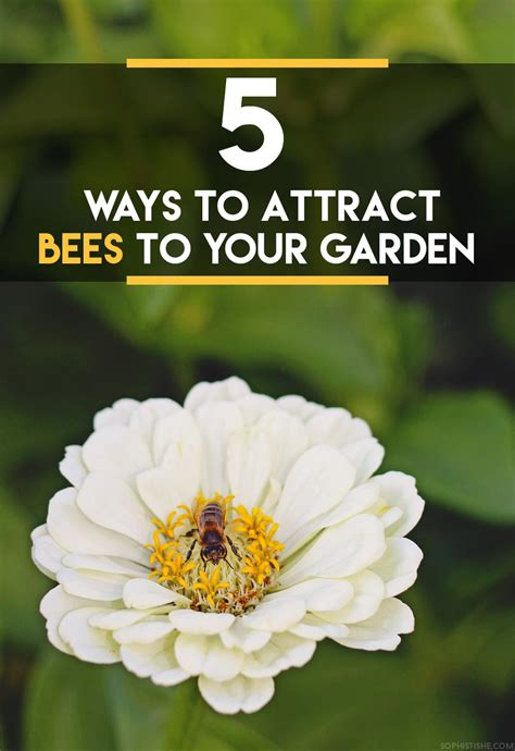 5 ways to attract bees to your garden 183 gardening