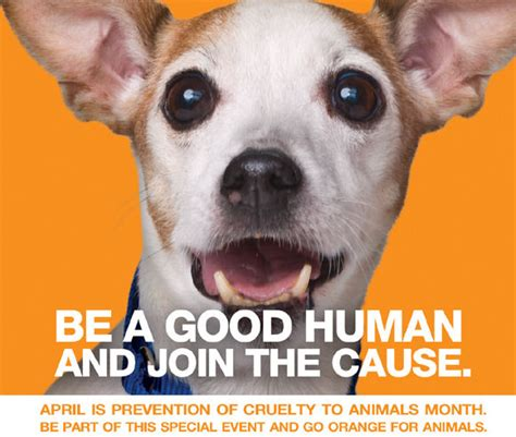 april  prevention  animal cruelty month  everyday