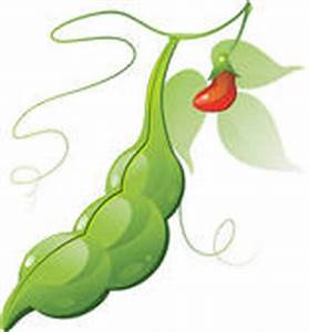 Bean Plant Clipart | Clipart Panda - Free Clipart Images