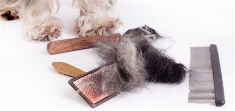 was hilft gegen katzen hunde und katzenhaare was hilft wirklich gegen katzen und hundehaare