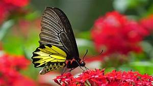 Top 10 most beautiful butterflies in the world - YouTube