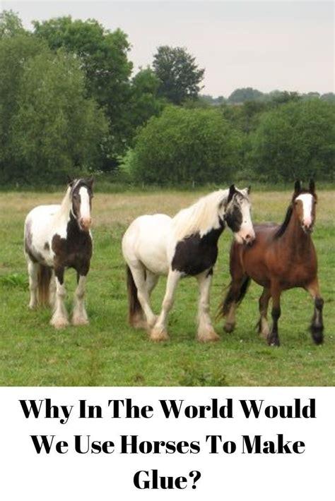 horses glue horse why