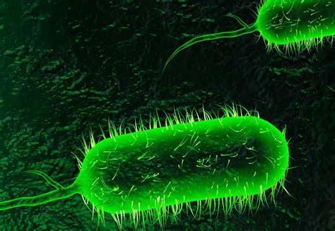 Cholera Symptoms And Treatment Health Care Qsota
