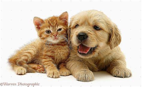 cute puppies kittens hd wallpaper  hd wallpapers