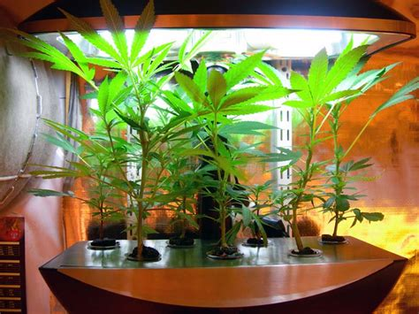 Inexpensive Outdoor Kitchen Ideas - aeroponics grow systems