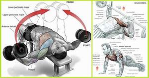 3 Most Efficient Exercises To Build Chest Muscles