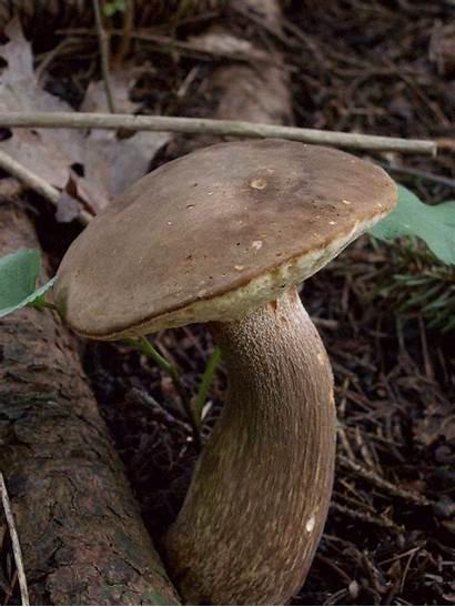 Mushroom Dancing Phallus Statue Horror Gifs Nodding