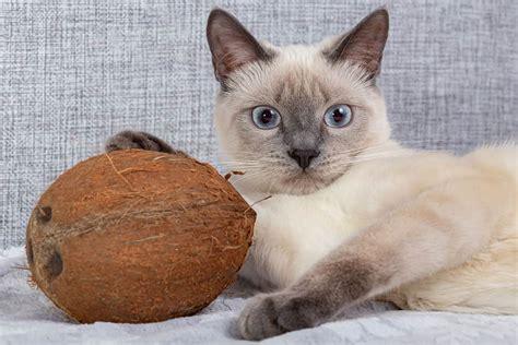 do cats like coconut smell