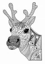 Coloring Reindeer Christmas Adult Pages sketch template