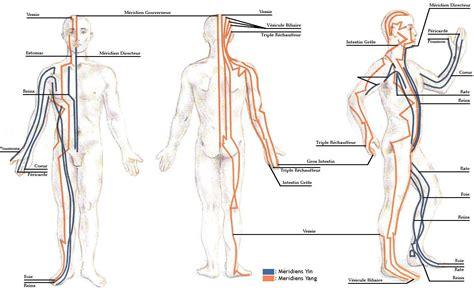 meridien du corps humain comment utiliser vos m 233 ridiens pour traiter la fatigue chronique