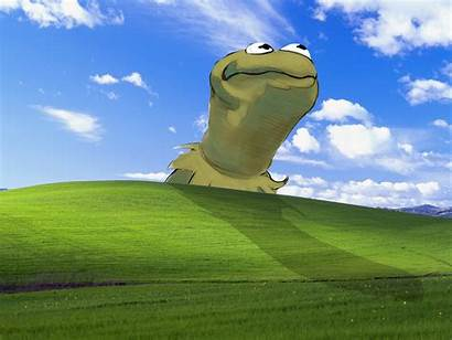 Kermit Monster Cookie Alphabet Joey Meme Know