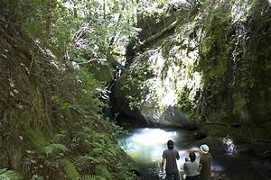 Big Basin Redwoods State Park | From the Bay to the Plains