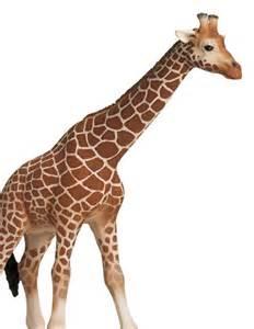 Schleich African Animals Toy