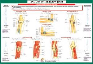 Elbow Joint Anatomy