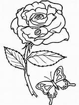 Coloring Printable Roses Rose sketch template