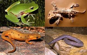 Amphibian Animals List | Amazing Wallpapers