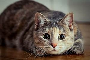 Kann Der Vermieter Katzen Verbieten : so sollten sie fremde katzen begr en aus liebe zum haustier ~ Buech-reservation.com Haus und Dekorationen